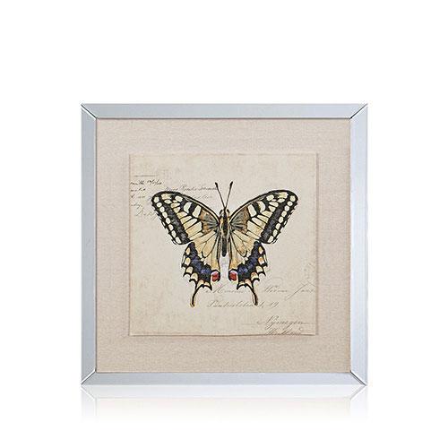 Marco espejado gráfica mariposas